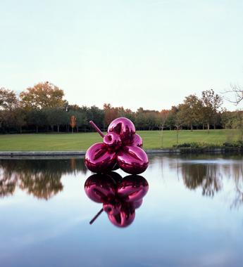 Balloon Flower (Magenta)