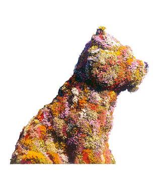 Puppy - John Kaldor 40th Anniversary Art Project